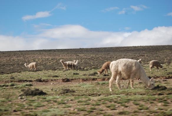 14c-Camino a Puno (60)