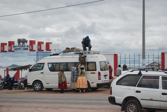 cargando la obeja comprada en el mercado