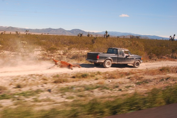 23fff-Camino a Monterrey (5) reducida